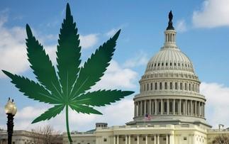 Georgia U.S. Senate candidates speak out on medical marijuana