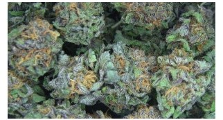 No, Georgia Did Not Legalize Marijuana